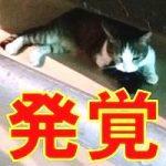 沖縄のウミガメ研究団体、猫の不正な飼育で環境破壊?条例違反も発覚