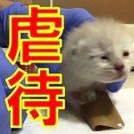 ネコ虐待疑惑の残酷な動画が相次いで発覚!警察の対応に疑問の声が続出