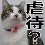 テレビの動物番組、「子供に何をされても怒らない猫」の扱いは虐待なのか?