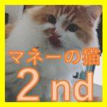 マネーの猫 ~2ndステージ