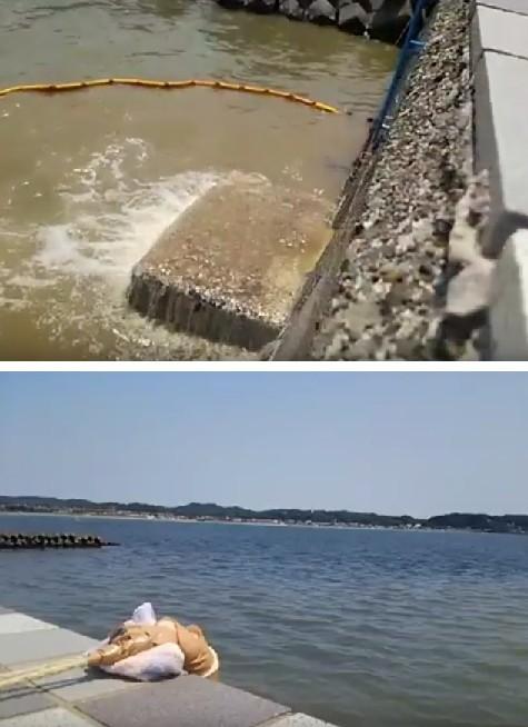 鎌倉で下水を海に放流する現場を撮影した動画が流出!現状と海産物の安全性は